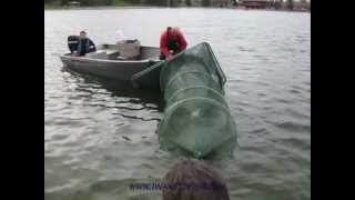 How to Use a Fyke Net to Capture Yellow Perch