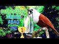 Suara Burung Masteran Paling Di Cari  Mp3 - Mp4 Download