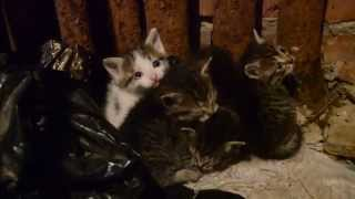 Подвальные котята