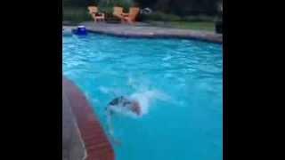 Smjesni deda pada pri skoku u bazen