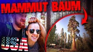 USA Mammut Baum - Sequoia National Park - Outdoor Bushcraft Trekking Wandern Survival (deutsch)