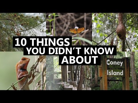 10 Things You Didn't Know About Coney Island Singapore | CNA Insider