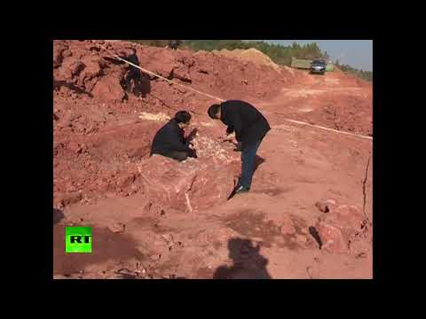 Dozens of fossilized dinosaur eggs unearthed in east China