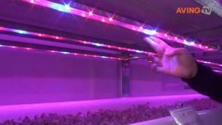 카스트친환경농업기술 LED 램프 이용한 식물 생장 기술