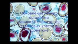 Все самое важное о стволовой клетке