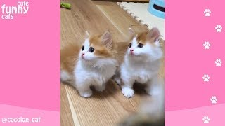 NEW CUTE KITTENS and FUNNY CATS compilation