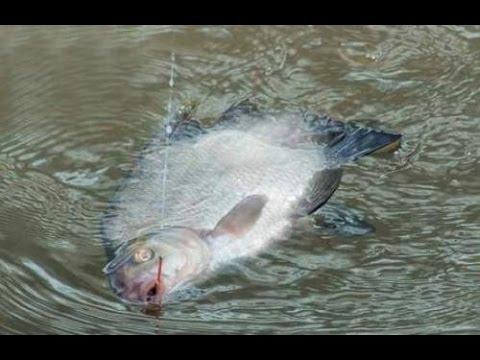 Рыбалка на леща.#