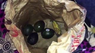 Ripen Avocados Quickly