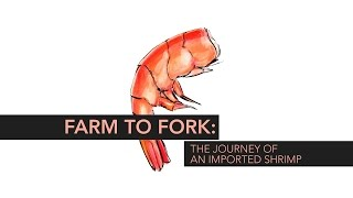 Farm to Fork: The Journey of an Imported Shrimp | Consumer Reports