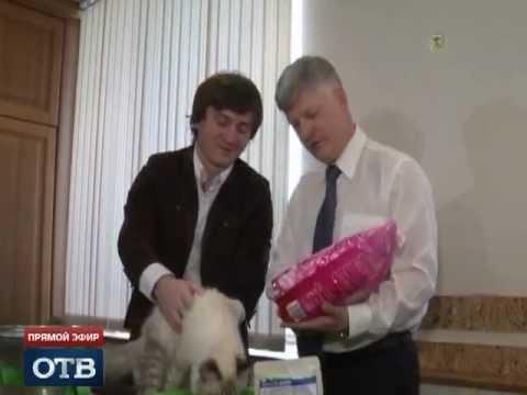Сказ о том, как кот Бублик к мэру приехал
