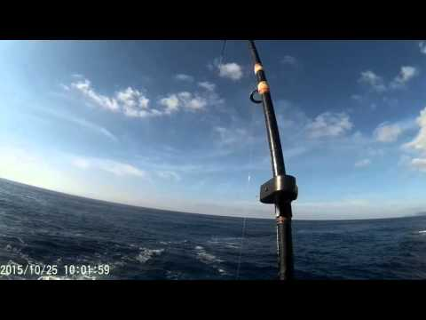Ribolov štapom sa obale - Udarac ribe i kidanje from YouTube · High Definition · Duration:  1 minutes 42 seconds  · 13.000+ views · uploaded on 26.10.2015 · uploaded by Zoran Cetkovic