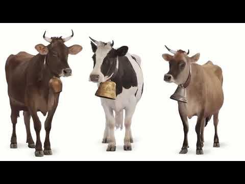 Веселая корова