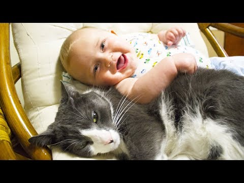 Cute Cats and Dogs Love Babies Compilation