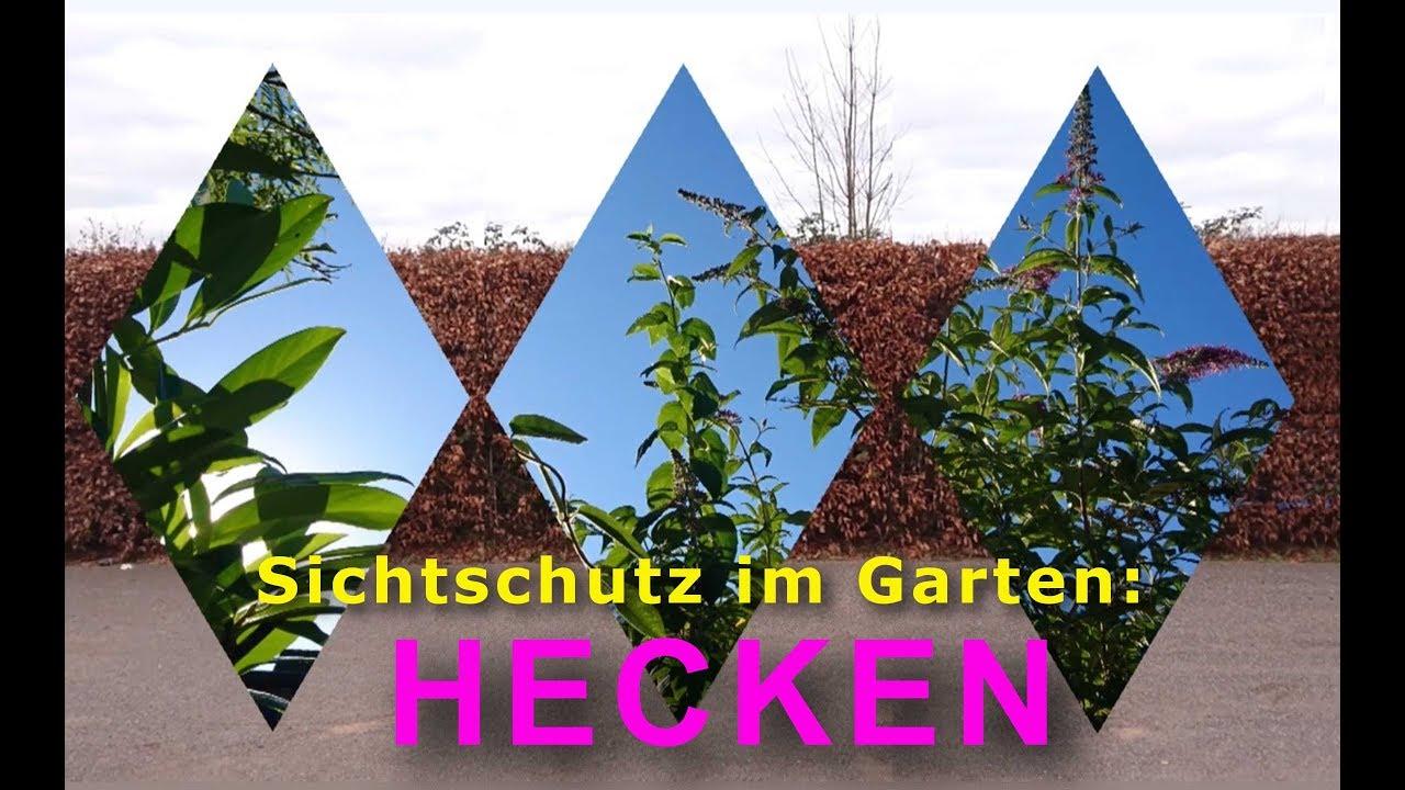 Sichtschutz Im Garten Hecken Und Unnotige Gartenarbeit Youtube