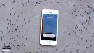 Ants Circling Iphone ( David Moleon - Chimpance )