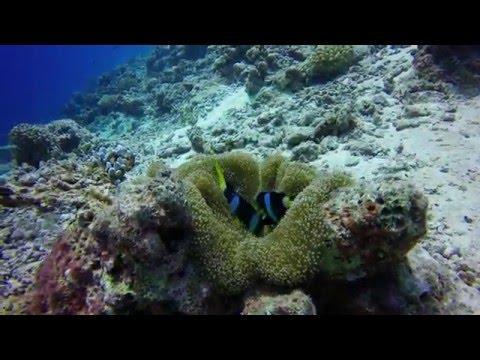 Epic Maldives Scuba in 4K