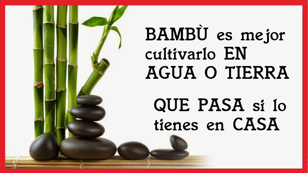 caa bambu decoracion