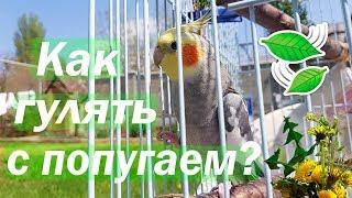 Как гулять с попугаем на улице? Солнечные ванны для попугая. | Рокки Life