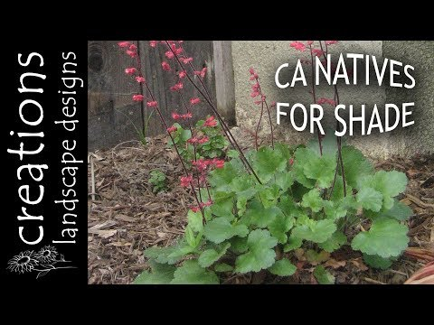 Top 3 California Native Plants For Shade