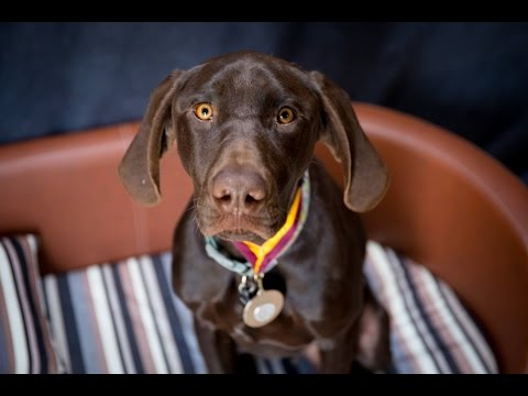 Ted – German Shorthaired Pointer – 3 Weeks Residential Dog Training