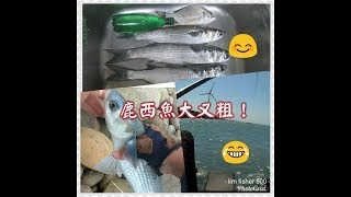 過期大燕麥片誘餌,魚魚都愛吃!(海釣篇)磯釣/fish/西堤/北堤