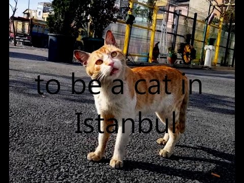 ''to be a cat in Istanbul''
