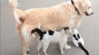 наша СОБАКА- Подруга всех кошек во дворе. dog and cats.-1