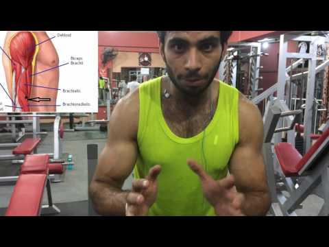 How to train Brachialis Muscle | Very Effective|Detail Explanation ARM ANATOMY |Urdu/Hindi
