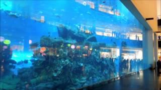 Аквариум,  в котором обитают 33 тысячи  разновидностей рыб !!!