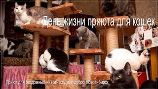 Счастливые коты в приюте принимают подарки | Приют для бездомных животных Дари добро Новосибирск
