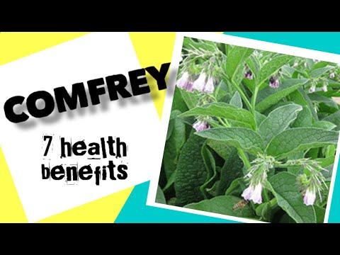 7 Health benefits of Comfrey | Herbal Medicine