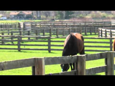 Eric Church - Carolina [Fairly Official Music Video]