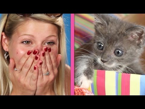 Thumbnail: Cat Lovers Get Surprised By A Box Of Kittens