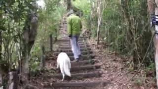 ソフィー2歳 階段をゆっくり、パパの一段後から歩く練習を始めました。