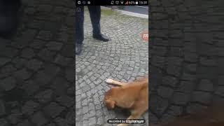 Köpeğe eziyet