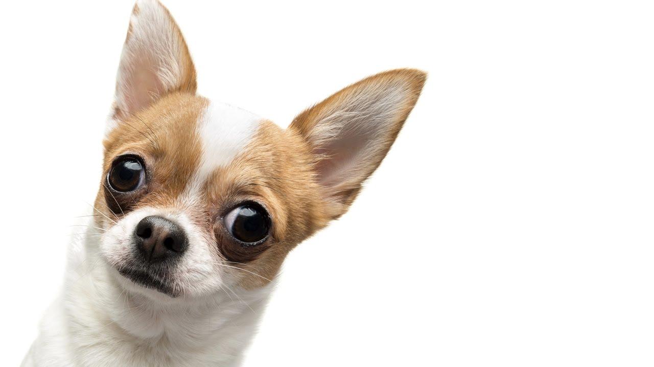 Pepe The Dog Youtube
