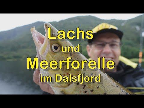 Lachse Und Meerforellen Im Dalsfjord