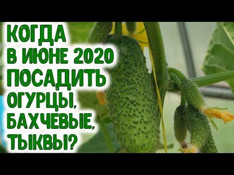Когда в июне 2020 года посадить огурцы, бахчевые культуры и тыквы? Благоприятные дни для посадки | агрогороскоп | агропрогноз | календарь | горяченко | посевной | июнь_2020 | лунный | раиса | года | для