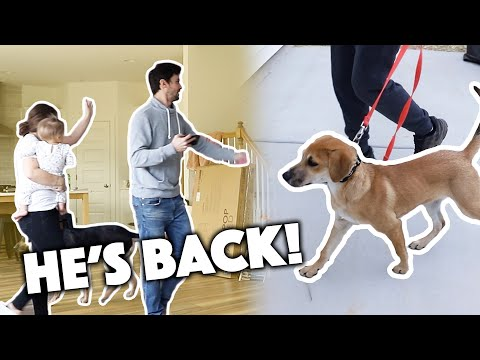 BRINGING OUR PUPPY TO OUR NEW HOME!