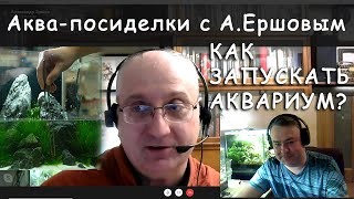 Как запускать аквариум Аква посиделки с А Ершовым