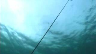 Fishing in No-Take Reserves