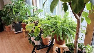 오늘, 우리집 식물일지 ? 우리집 거실정원