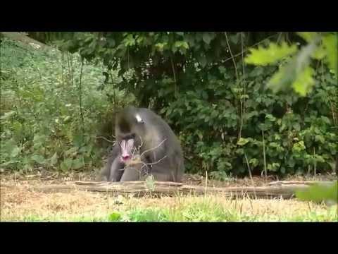 La vallée des singes 27 07 2015