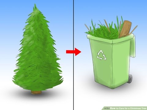 how to care for a christmas tree how to