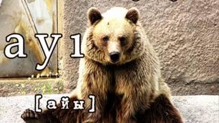 Азербайджанский язык, животные -  heyvanlar - www.az-love.com