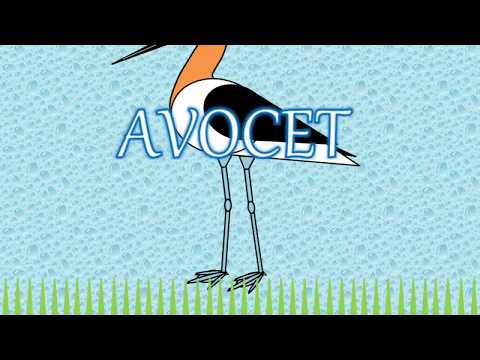 How to draw an Avocet