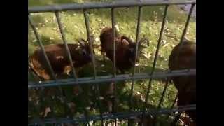 Tierfütterung im Zoo Dessau
