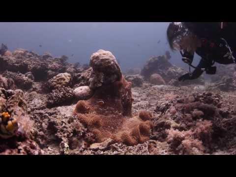 Verde Island Dive - June 26, 2017