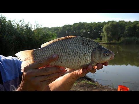 Крупный карась на Флэт фидер, Flat Feeder, ловля рыбы в жару