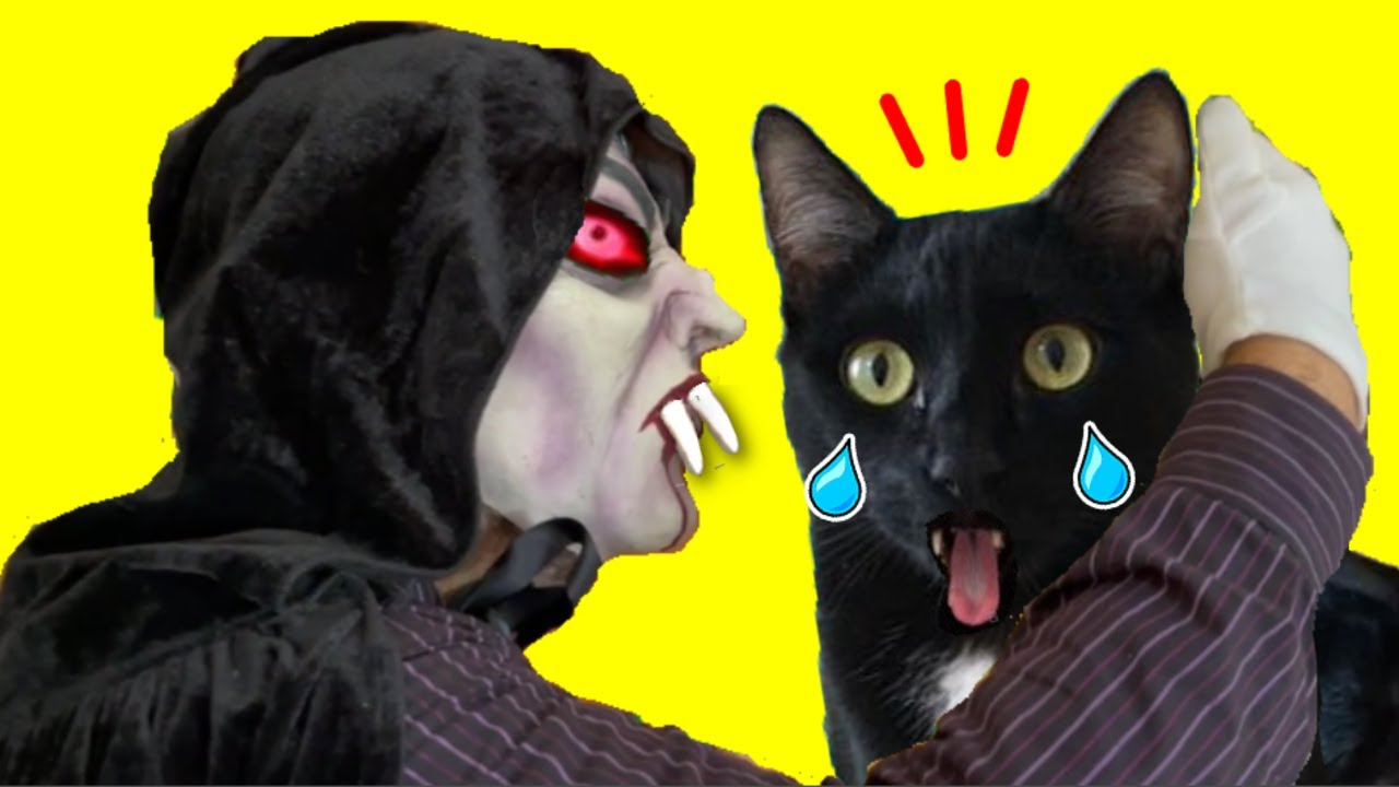 Gatos Luna y Estrella el vampiro muerde a mi gato negro / Videos de gatitos graciosos